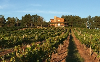 Vineyard image
